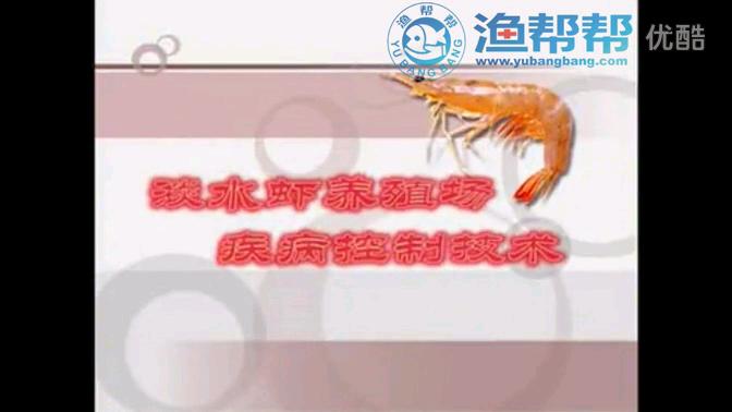 淡水虾养殖厂疾病控制技术