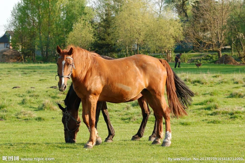 马的养殖技术(下)