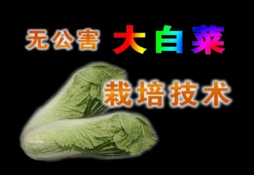 无公害大白菜栽培技术