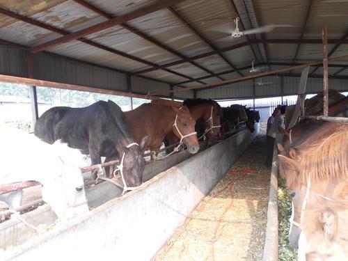 马的养殖技术(上)