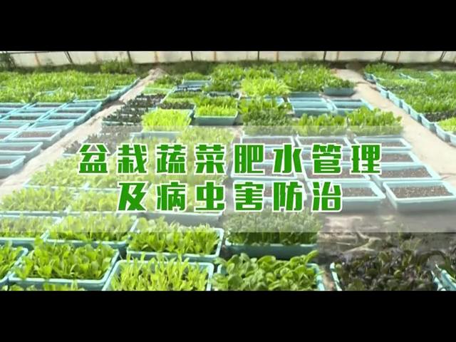 盆栽蔬菜肥水管理及病虫害防治